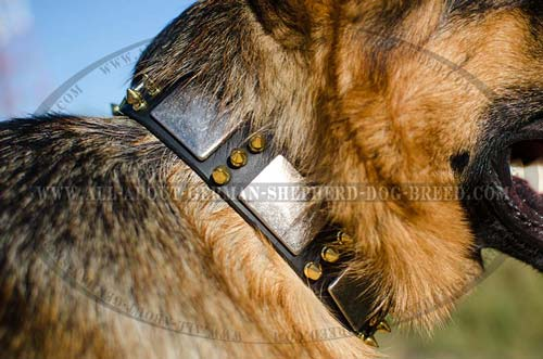 German Shepherd leather collar with sparkling decorations