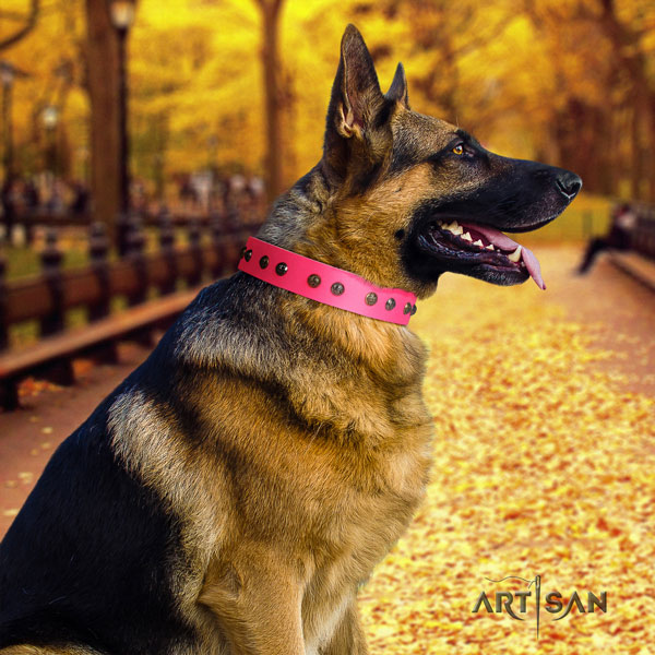 German Shepherd extraordinary full grain leather dog collar