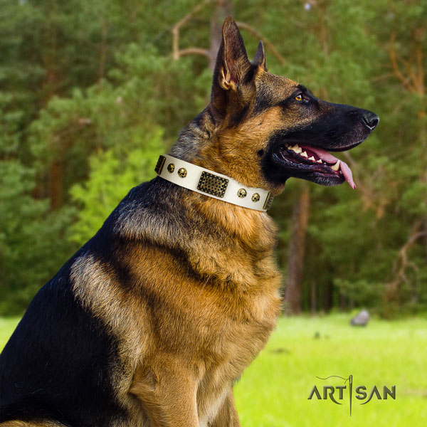 German Shepherd studded full grain leather dog collar for your stylish four-legged friend