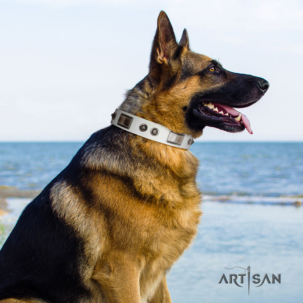 German Shepherd studded full grain genuine leather dog collar for your attractive four-legged friend