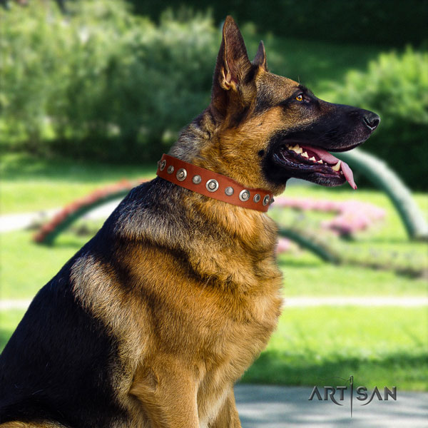 German Shepherd studded full grain genuine leather dog collar for your stylish pet