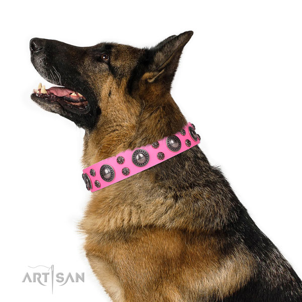 German Shepherd handcrafted full grain natural leather dog collar for handy use title=German Shepherd full grain natural leather collar with adornments for everyday walking