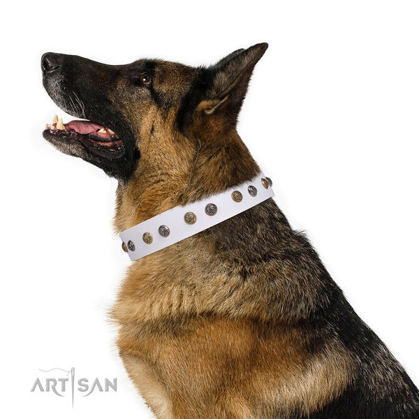 German Shepherd exceptional full grain genuine leather dog collar for walking title=German Shepherd leather collar with studs for fancy walking