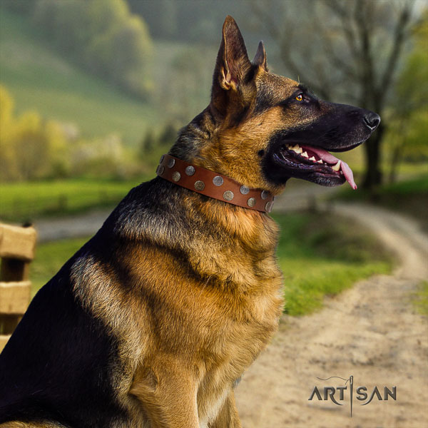 German Shepherd easy adjustable full grain natural leather dog collar with impressive adornments