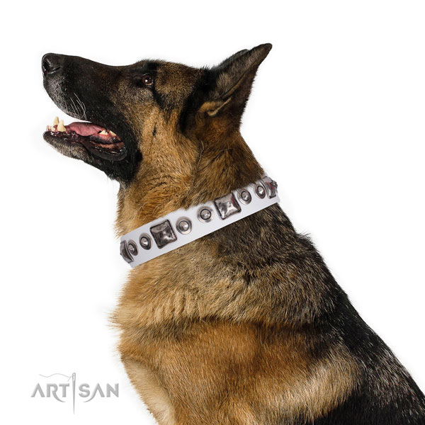 German Shepherd trendy full grain leather dog collar for daily walking title=German Shepherd full grain natural leather collar with adornments for stylish walking