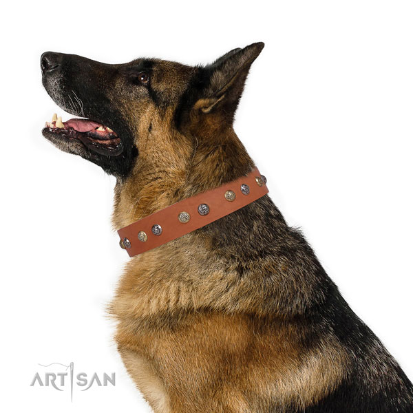 German Shepherd incredible natural genuine leather dog collar for fancy walking title=German Shepherd full grain genuine leather collar with studs for everyday use