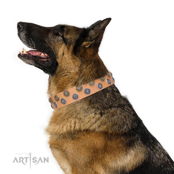 German Shepherd embellished full grain leather dog collar for stylish walking title=German Shepherd leather collar with decorations for easy wearing