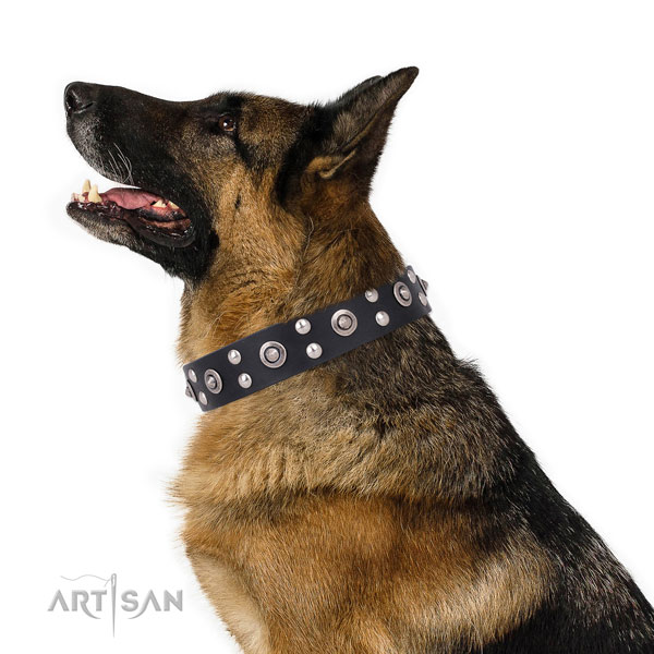 German Shepherd remarkable genuine leather dog collar for everyday use title=German Shepherd full grain natural leather collar with decorations for fancy walking