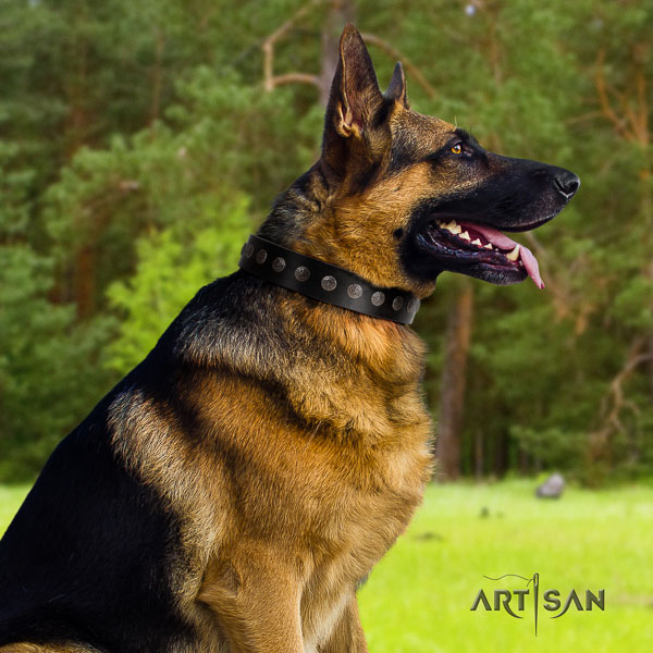 German Shepherd perfect fit full grain natural leather dog collar with extraordinary adornments