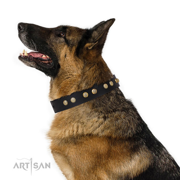 German Shepherd handmade leather dog collar for basic training title=German Shepherd full grain genuine leather collar with studs for comfy wearing