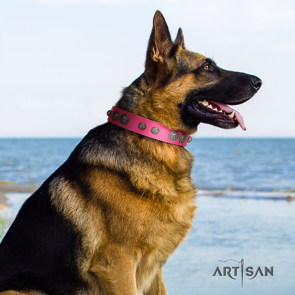 German Shepherd fine quality full grain leather dog collar with fashionable adornments