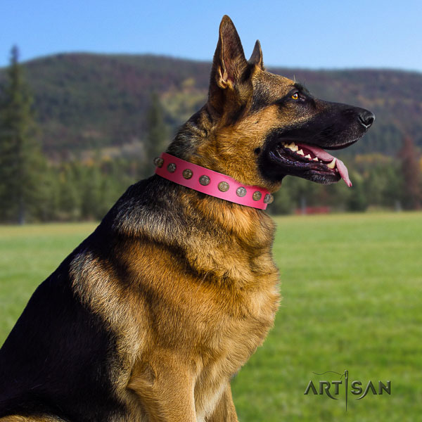 German Shepherd convenient full grain leather dog collar with fashionable embellishments