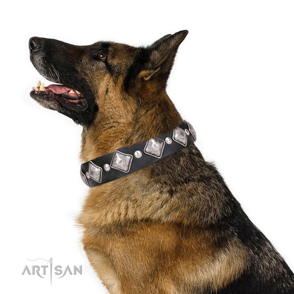 German Shepherd convenient full grain genuine leather dog collar for basic training title=German Shepherd genuine leather collar with embellishments for daily use