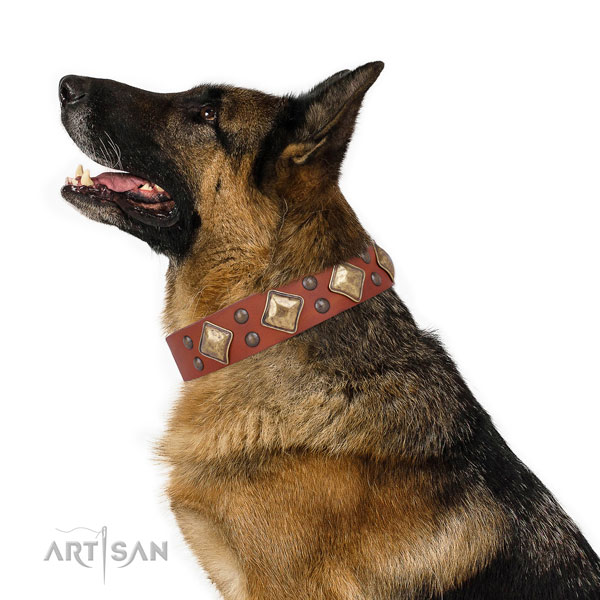 German Shepherd best quality full grain natural leather dog collar for everyday walking title=German Shepherd full grain genuine leather collar with adornments for daily use
