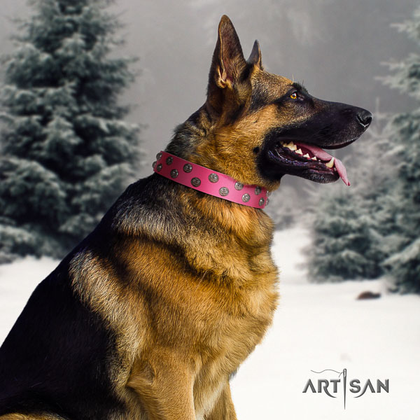 German Shepherd convenient full grain natural leather dog collar with stunning embellishments