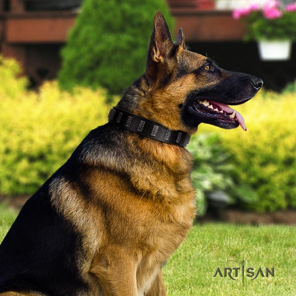 German Shepherd comfortable full grain genuine leather dog collar with impressive studs