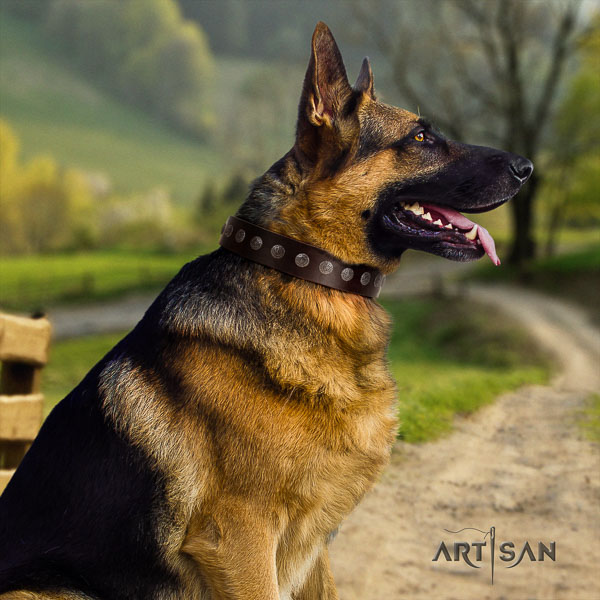 German Shepherd easy to adjust natural genuine leather dog collar with top notch studs