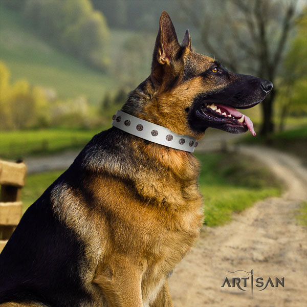 German Shepherd fine quality full grain natural leather dog collar with awesome decorations
