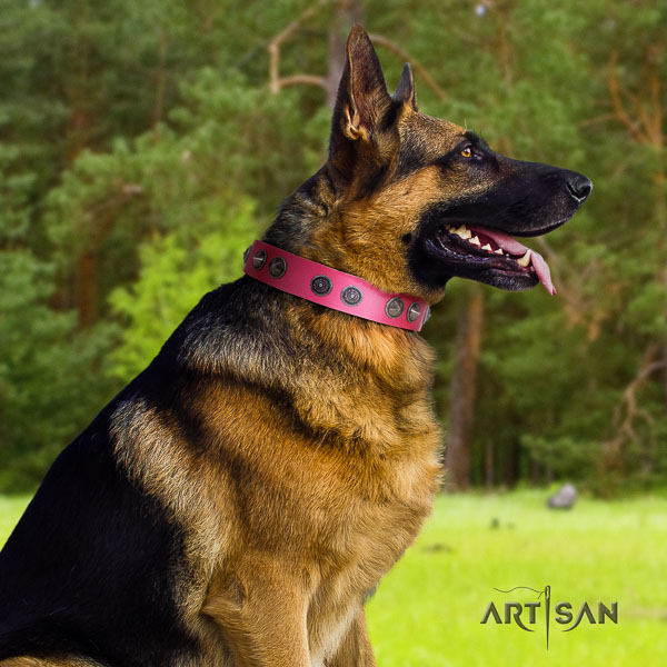 German Shepherd easy wearing leather dog collar with unusual embellishments