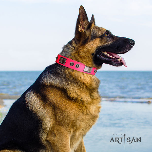 German Shepherd studded leather dog collar for your stylish four-legged friend