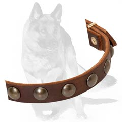 Durable leather collar with studs