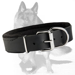 Extra strong leather collar with riveted hardware