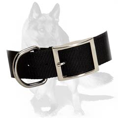 Sturdy nylon collar with riveted hardware