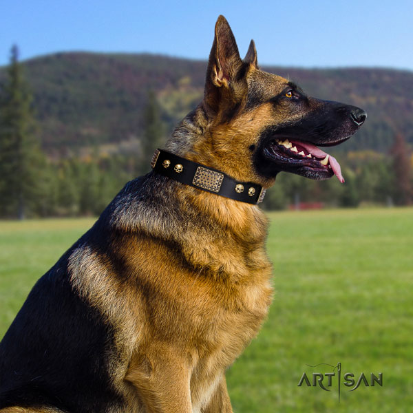German Shepherd embellished full grain genuine leather dog collar for your attractive doggie