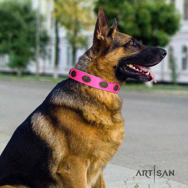 German Shepherd studded full grain leather dog collar for your handsome canine