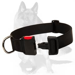 Easy in use nylon collar with quick release buckle