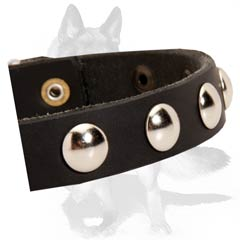 Non-rusting leather collar with nickel studs