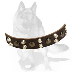 German Shepherd leather collar with non-corrosion details