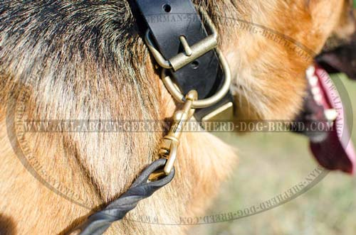 German Shepherd leather collar with brass buckle and D-ring
