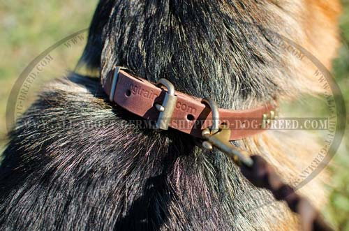German Shepherd leather collar with nickel plated hardware