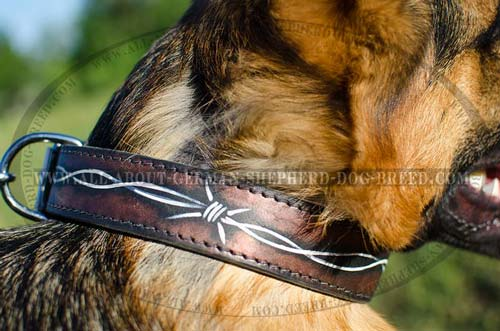 Reliable leather collar equipped with stainless hardware