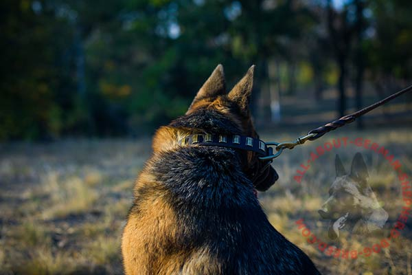 Stylish leather German Shepherd collar with strong hardware