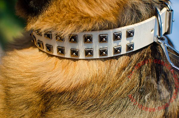 Unmatchable leather German Shepherd collar with embossedold nickle studs