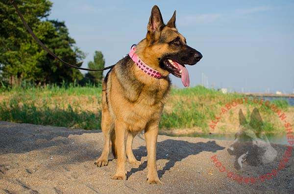 Decorated leather German Shepherd collar for walking
