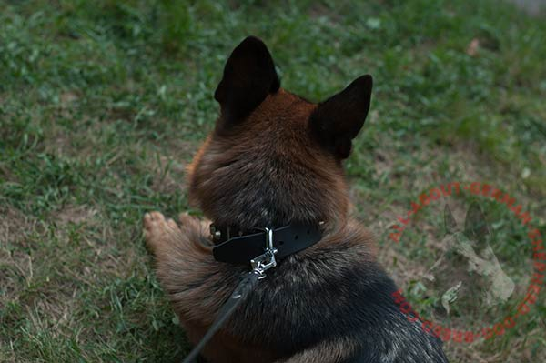 Leather German Shepherd collar with classical buckle