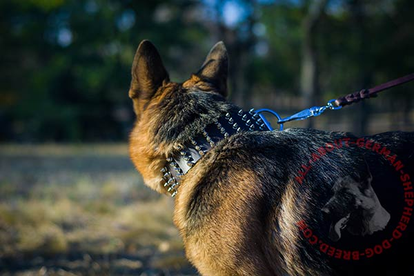 Top quality leather German Shepherd collar with spikes