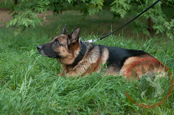 Reliable training leather German Shepherd collar
