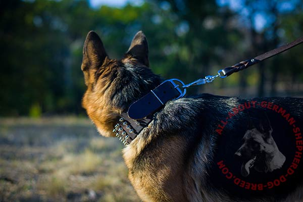 Stylish leather German Shepherd collar with rust  resistant hardware