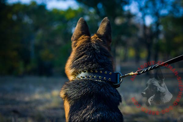 Soft leather German Shepherd collar with rust resistant fittings