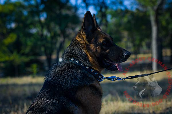 Leather German Shepherd collar with square studs