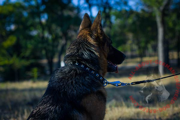 Reliable leather German Shepherd collar with durable hardware