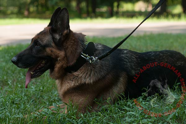 Easy-to-adjust leather German Shepherd collar