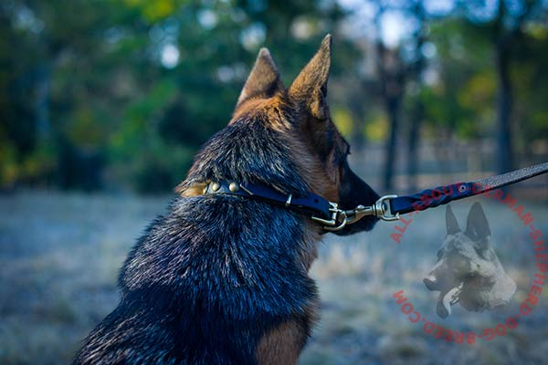 Handmade leather German Shepherd collar with brass plated hardware