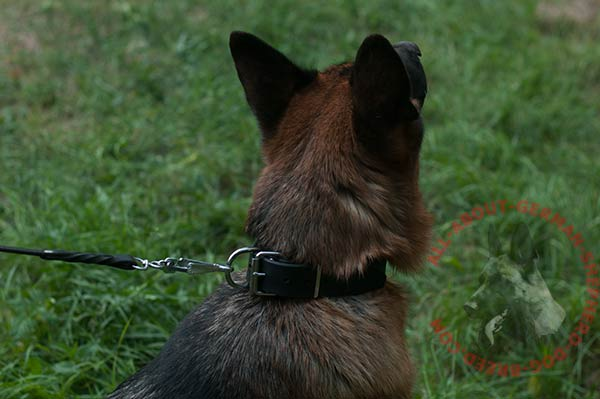 Dog-safe leather German Shepherd collar with steel nickel plated hardware