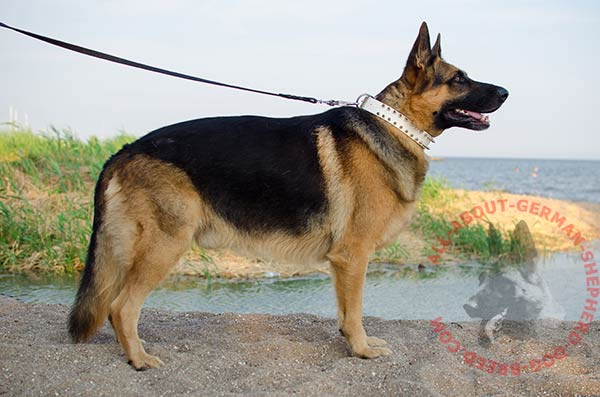 Handcrafted leather canine collar for German Shepherd