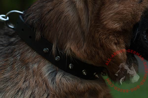 Handmade leather dog collar for German Shepherd